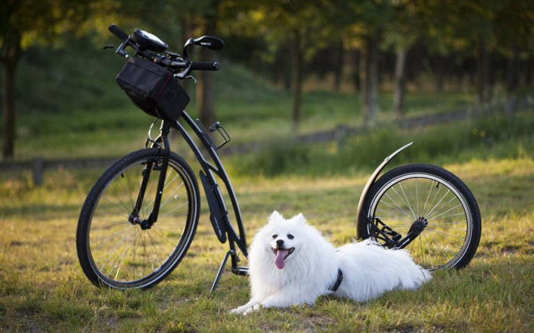 13 Regels om te fietsen met je hond